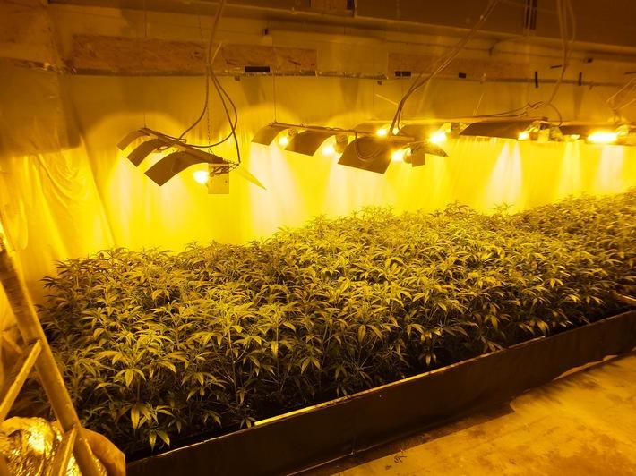 Blick auf die Cannabisplantage