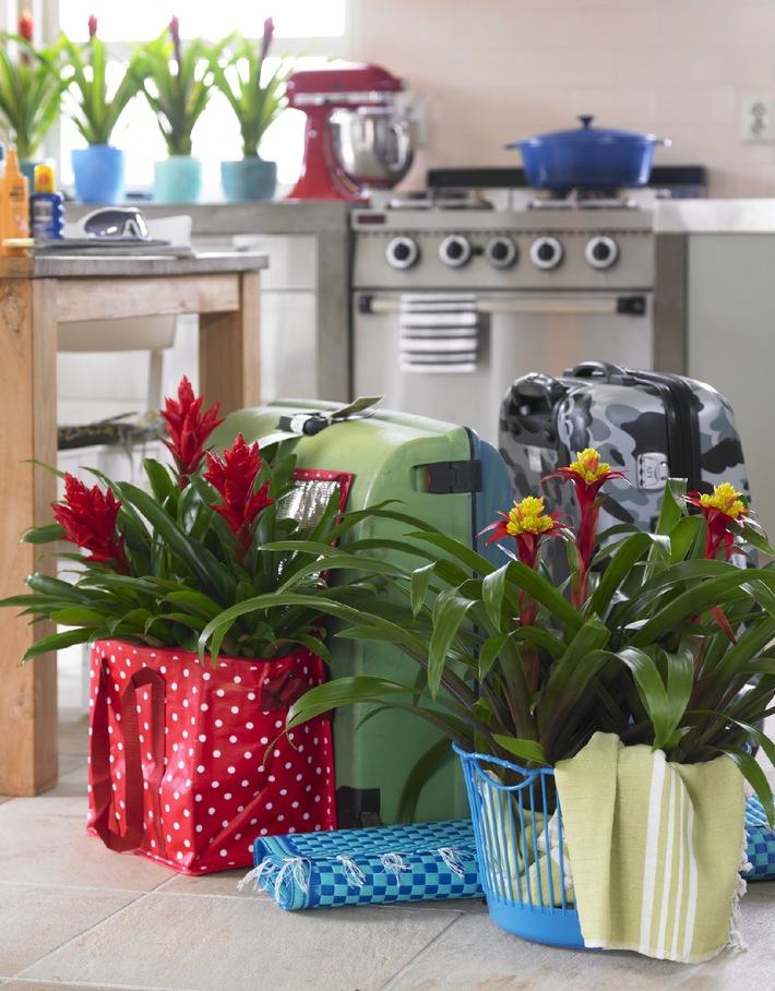 Karibisches Ambiente im Wohnzimmer -  Bromelien peppen die kalte Jahreszeit auf (mit Bild)