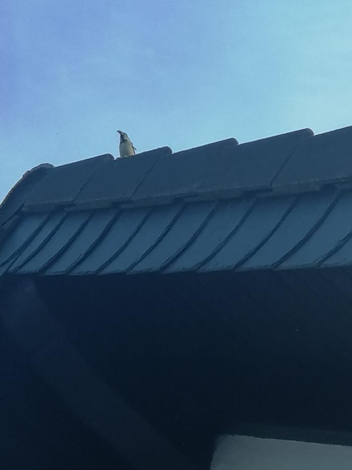 POL-PDMY: Pillig (Maifeld) - Meldung über einen Pinguin auf dem Dach eines Wohnhauses