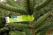 Quando l'albero di Natale bussa alla porta / Circa l'80 per cento degli alberi di Natale Coop proviene dalla Svizzera