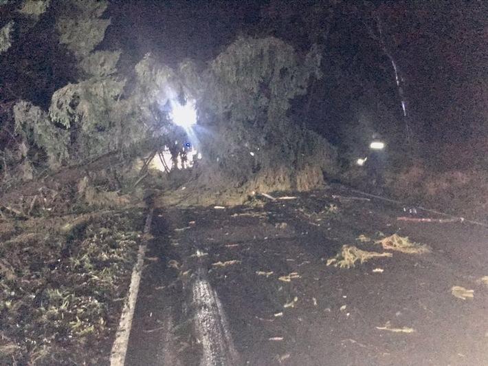 Umgestürzter Baum zwischen Neuhaus und Silberborn