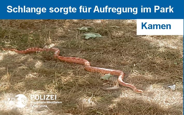 Schlange in Kamener Park