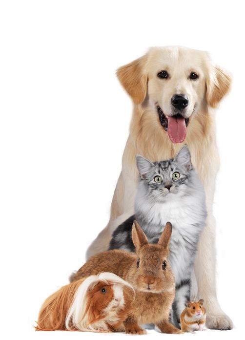 """Presse-Info: """"Liebe-Dein-Haustier-Tag"""" - welches sind die beliebtesten Haustiere?"""