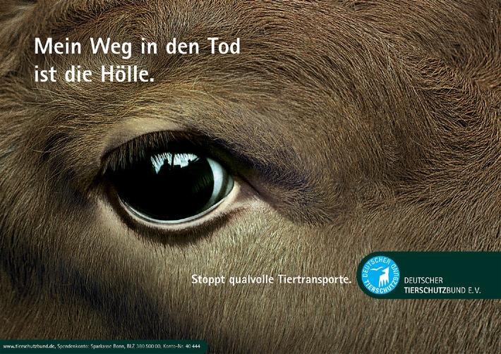 Tiertransporte Thema im Bundesrat: Acht Stunden sind genug (mit Bild)