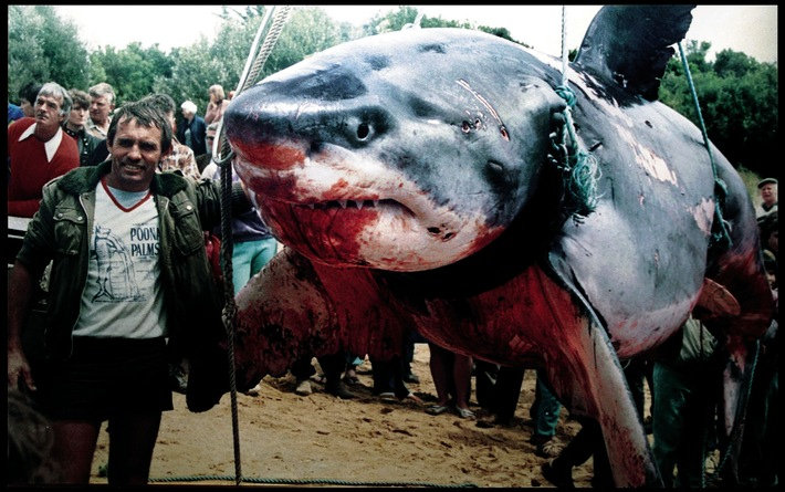 Hai-Experte warnt / Angriffe von Haien auf Menschen nehmen dramatisch zu