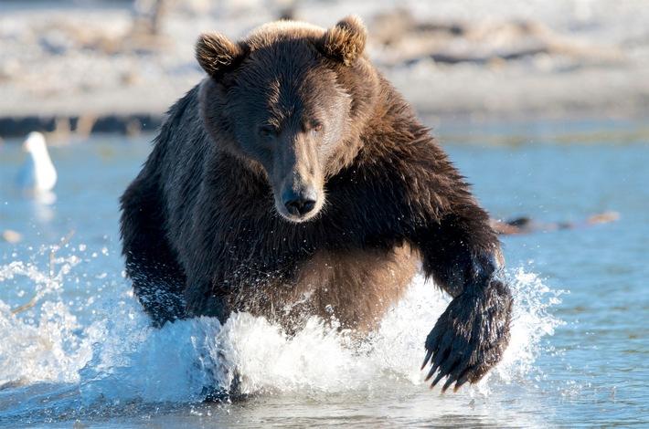 """""""Russlands weite Wildnis"""" ab 3. Juni sonntags um 19.25 Uhr  auf Nat Geo Wild"""