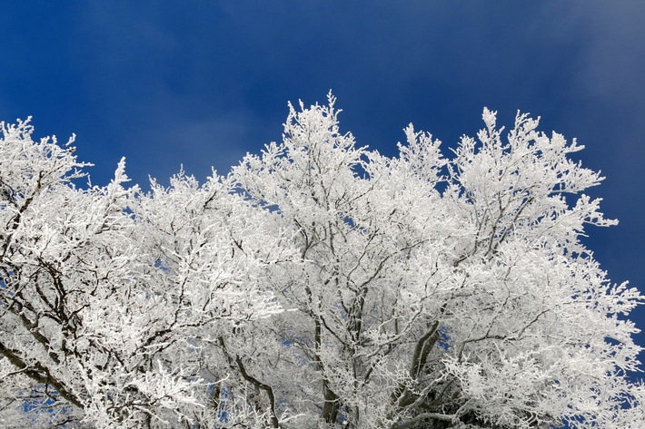 Baumpflege im Winter