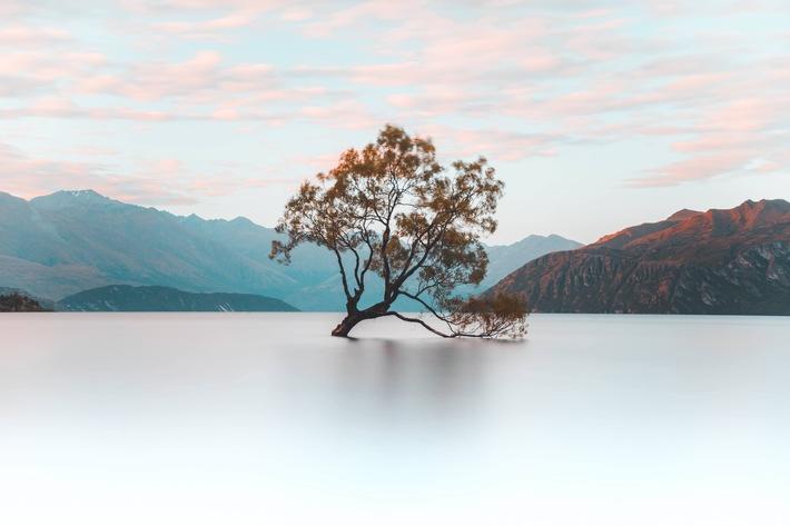 """Wanaka-Baum im Lake Wanaka, Otago, Neuseeland. HINWEIS: Die Verwendung dieses Bildes ist für redaktionelle Zwecke im Rahmen der Berichterstattung über die Zusammenarbeit honorarfrei. Veröffentlichung bitte unter Quellenangabe """"picture alliance/ robertharding/ Nicky Price"""". Weiterer Text über ots und www.presseportal.de/nr/60900 /"""