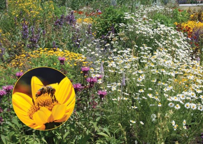 """Gesunde Bienen brauchen bunte Vielfalt - Kernthema beim """"Tag der deutschen Imkerei"""""""