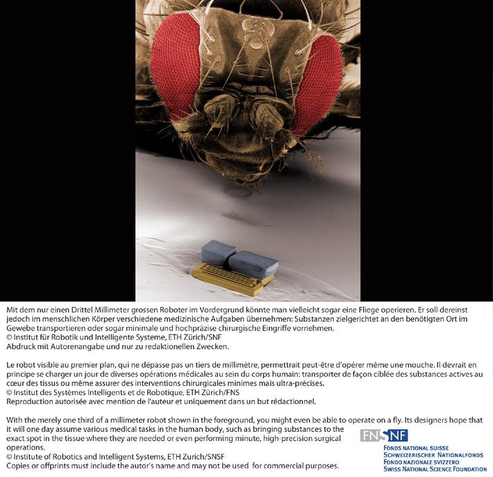 Le robot visible au premier plan, qui ne dépasse pas un tiers de millimètre, permettrait peut-être d'opérer même une mouche. Il devrait en principe se charger un jour de diverses opérations médicales au sein du corps humain: transporter de façon ciblée des substances actives au coeur des tissus ou même assurer des interventions chirurgicales minimes mais ultra-précises.   © Institut des Systèmes Intelligents et de Robotique, ETH Zürich/FNS