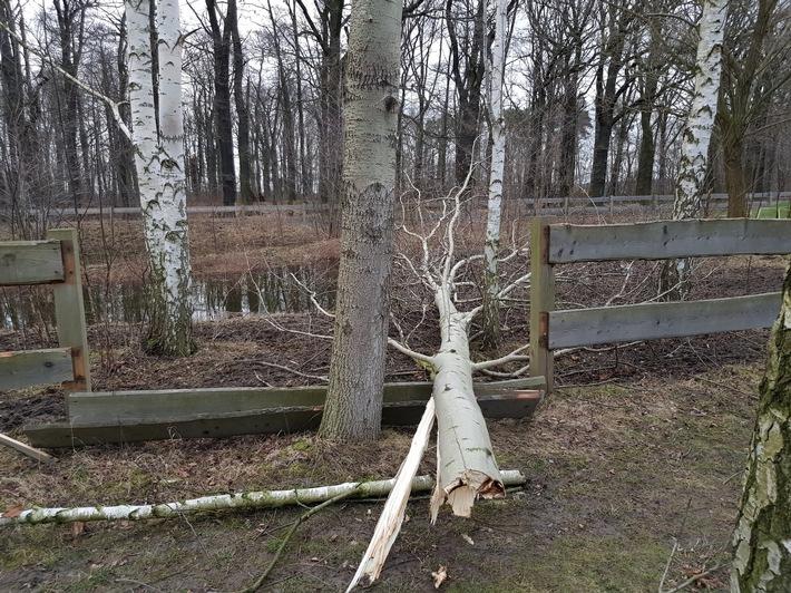Umgestürzter Baum in der Parkanlage am Albert-Schweitzer-Kinderdorf in Steinbach
