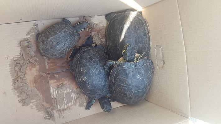 POL-NI: Nienburg/Stöckse: Unbekannter setzt vier Schildkröten am Stöckser See aus