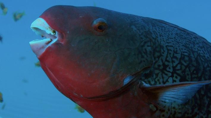 """""""Freaky November"""": Kurioses und Witziges aus der Tierwelt als Sonderprogrammierung auf Nat Geo Wild"""