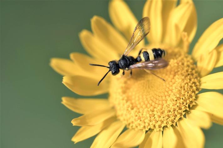 1_MDR WISSEN_Wie_geht_es_unseren_Insekten© MDR_In One Media_Mike Brandin....jpg