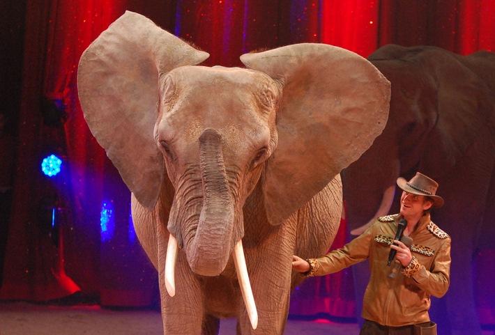 """Erwin Frankello mit Elefantenkuh Citta im letztjährigen Heilbronner Weihnachtszirkus. Der enorme Erfolg des überregional bekannten Heilbronner Weihnachtszirkusses beruht nicht zuletzt auf Dressurnummern mit Wildtieren. Solche Darbietungen will die Stadt Heilbronn nun durch ein kommunales Wildtierverbot unterbinden. Nach Meinung des Aktionsbündnisses """"Tiere gehören zum Circus"""" ist dies eine Bevormundung des Bürgers, die inhaltlich unbegründet und rechtlich fragwürdig ist. Weiterer Text über ots und www.presseportal.de/nr/103332 / Die Verwendung dieses Bildes ist für redaktionelle Zwecke honorarfrei. Veröffentlichung bitte unter Quellenangabe: """"obs/Aktionsbündnis """"Tiere gehören zum Circus""""/Dirk Candidus"""""""