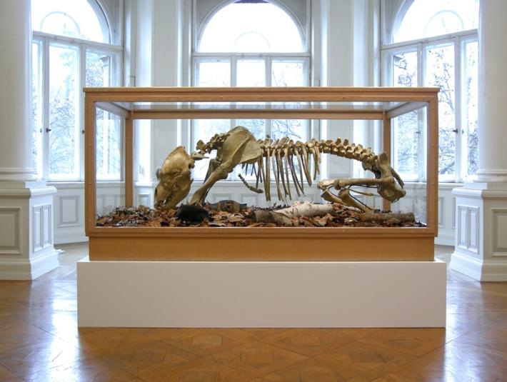 Mark Dion, Grotto of the Sleeping Bear - Revisited, 1998, 109 x 123 x 223 cm, Sammlung Migros Museum für Gegenwartskunst. Courtesy Galerie Christian Nagel and the artist.