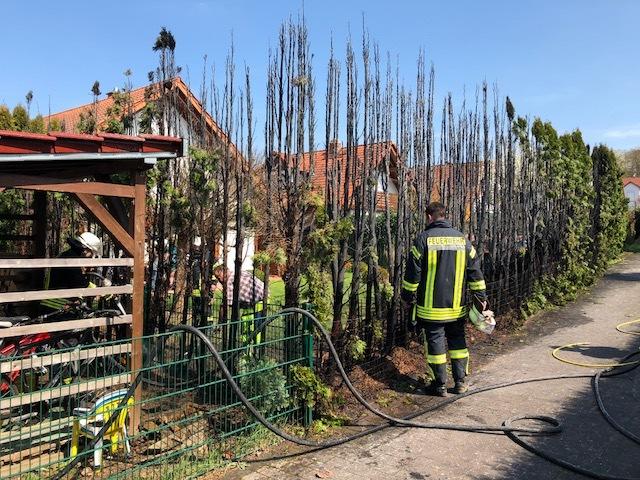 Abgebrannte Thujahecke in Münzenberg