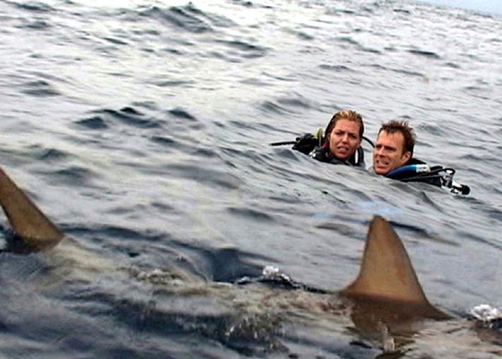 ProSieben: Hai-Life am Freitag