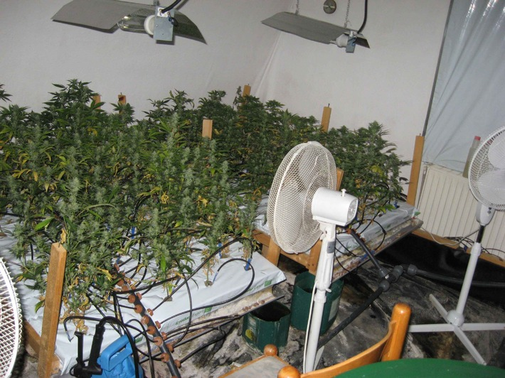 POL-CUX: Polizei erntet Cannabis-Plantage