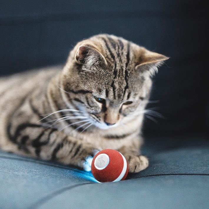 """Automatisches Katzenspielzeug zur Selbstbeschäftigung / Weiterer Text über ots und www.presseportal.de/nr/152212 / Die Verwendung dieses Bildes ist für redaktionelle Zwecke honorarfrei. Veröffentlichung bitte unter Quellenangabe: """"obs/Cheerble"""""""