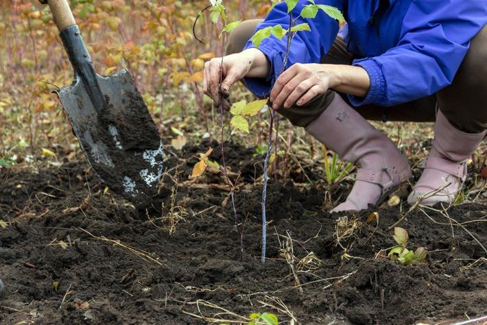 Klimawandel zeigt: Der Herbst ist die beste Pflanzzeit