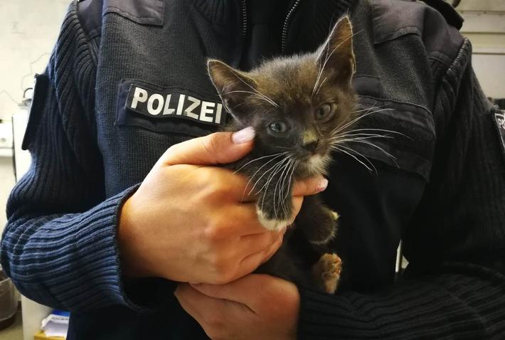 POL-LWL: Autofahrerin entdeckte ausgesetzte Katzen
