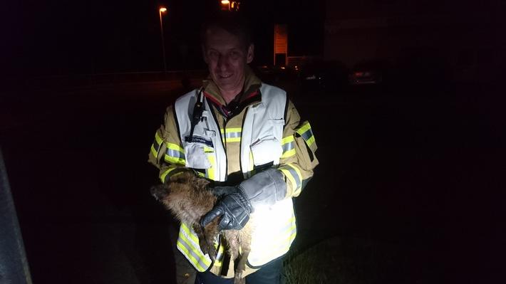 Der hilflose Frischling wurde wohlbehalten der Mendener Tierhilfe übergeben - Quelle: Feuerwehr Menden