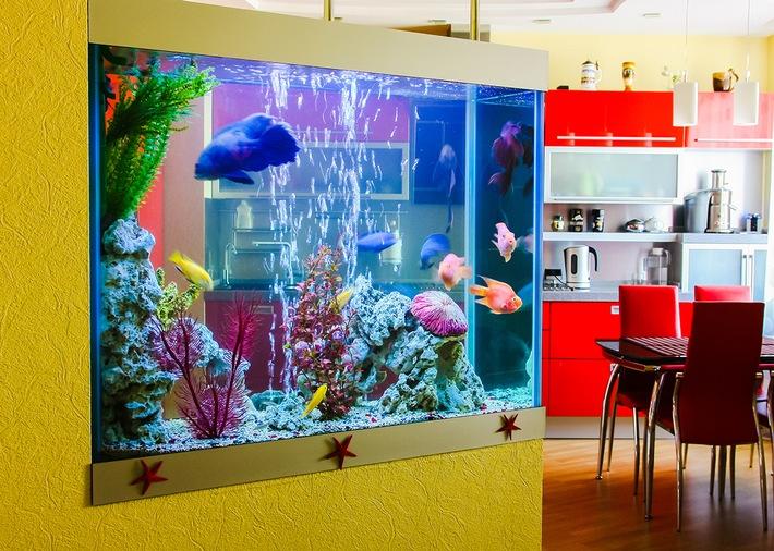 Die persönliche Unterwasserwelt zu Hause ist ein echter Blickfang. Foto: Mein-Haustier/IStock/zazamaza