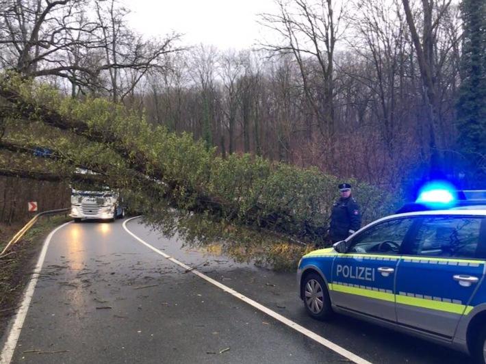 Umgestürzter Baum zwischen Lüchtringen und Boffzen