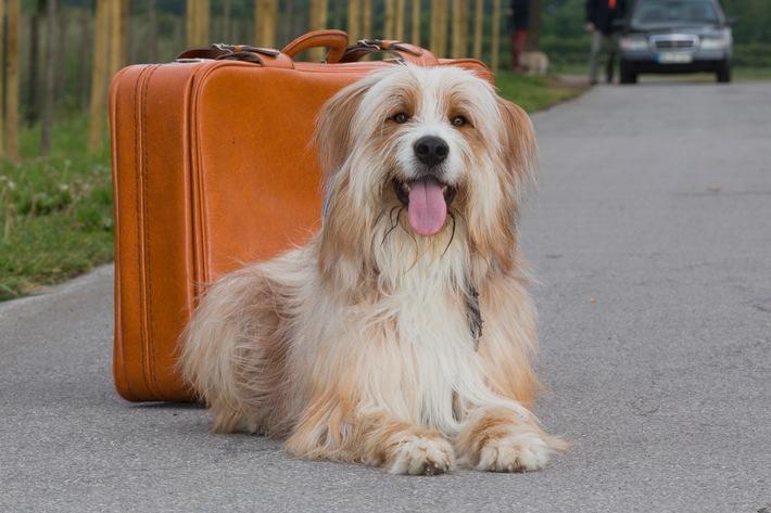 Hunde sind auch nur Menschen / Was tun, wenn der Hund unter Reisekrankheit leidet