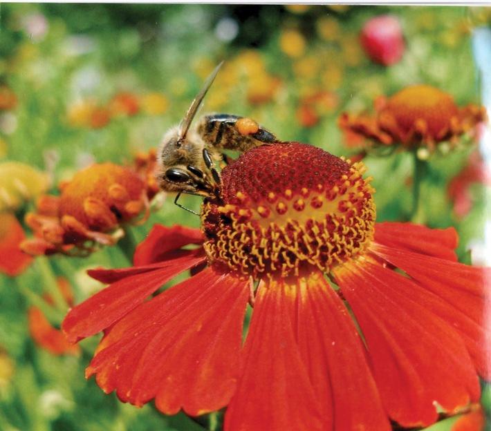 Biene sitzend auf einer Blume