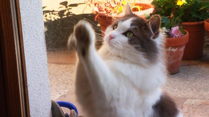 Das geheime Leben der Katzen / Was machen Haustiere, wenn sie unbeobachtet sind? Reportage am Mittwoch, 28. Juni, 21 Uhr im SWR Fernsehen