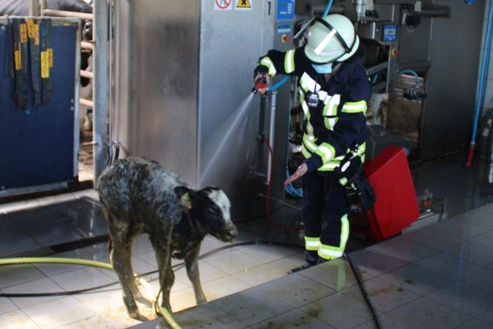 FW-LK Leer: Feuerwehr rettet Kalb aus Güllekeller