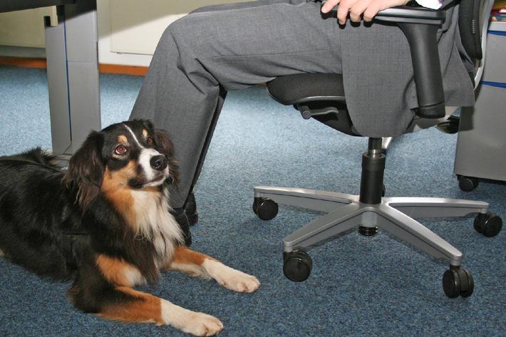 """Tierische """"Kollegen"""" brauchen Versicherungsschutz (mit Bild)"""