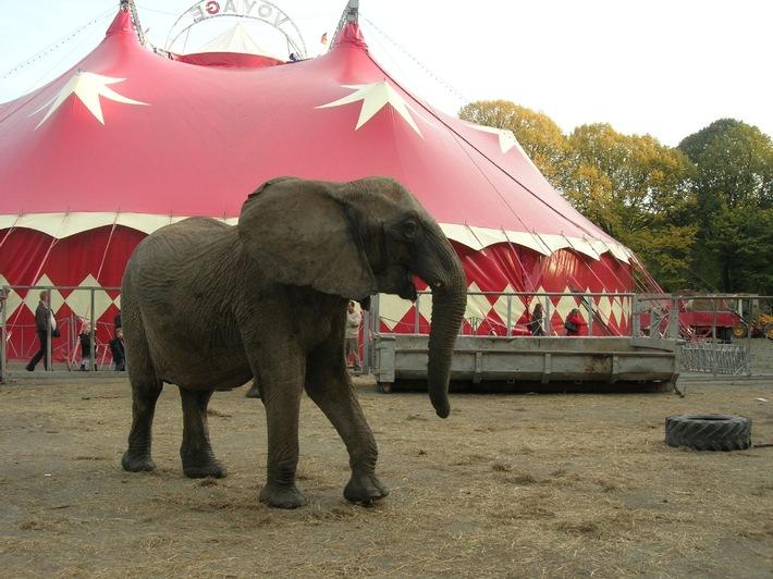 Hamburg: VIER PFOTEN fordert Olaf Scholz auf, Zirkusse mit Wildtieren zu verbieten