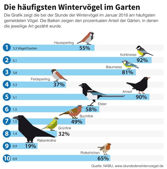 """NABU und LBV: Wieder mehr Wintervögel - insgesamt aber rückläufiger Trend / Die Grafik zeigt die zehn häufigsten Wintervögel und ihre Verbreitung in Gärten und Parks. Weiterer Text über ots und www.presseportal.de/nr/6347 / Die Verwendung dieses Bildes ist für redaktionelle Zwecke honorarfrei. Veröffentlichung bitte unter Quellenangabe: """"obs/NABU/Grafik: NABU"""""""