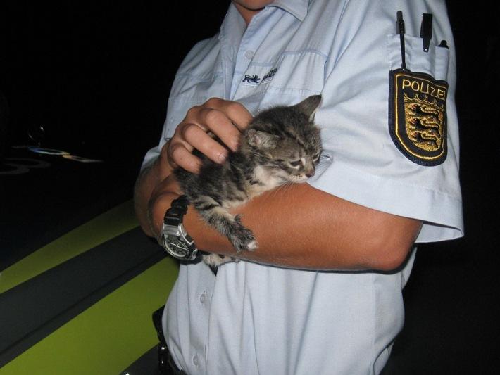POL-OG: Friesenheim, A 5 - Katzenbaby ausgesetzt