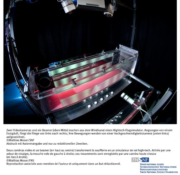 FNS: Image du mois juin 2008: Des mouches du vinaigre dans un simulateur de vol