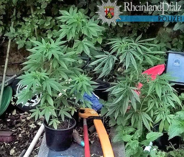 POL-PPWP: Haftbefehl vollstreckt - Drogen gefunden