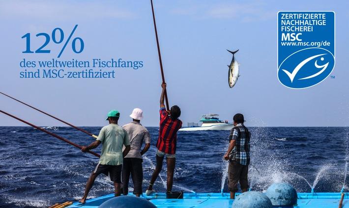20 Jahre MSC - eine Bilanz zum Auftakt der UN Meereskonferenz