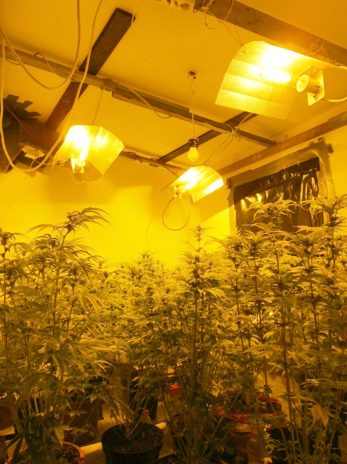 Zwei Männer im Alter von 22 und 28 Jahren stehen im Verdacht illegal Cannabis angebaut zu haben.