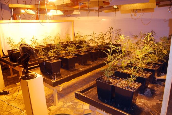 POL-WL: Marihuana-Plantage ausgehoben