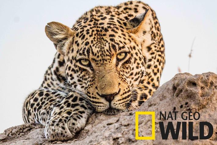 Fox Networks Group baut Verbreitung des Nature & Wildlifesenders Nat Geo Wild in Deutschland weiter aus
