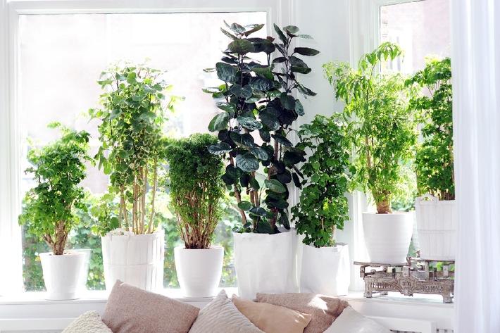 Schone Schattenpflanze Fiederaralie Adelt Dunkle Ecken Bild