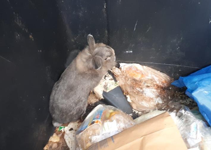 Kaninchen Foto 1
