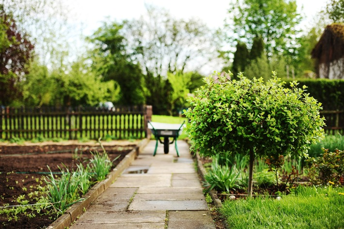 Mit Bäumen im Garten dem Klimawandel trotzen