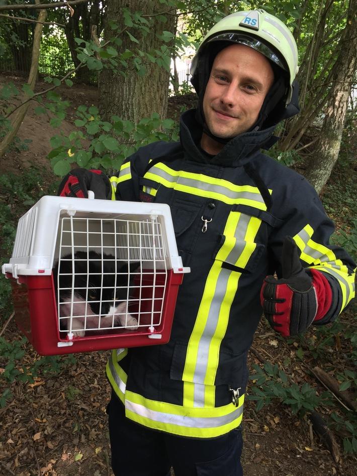 Die Feuerwehr rettete eine junge Katze, die sich schon zwei Tage in einem Baum befand.