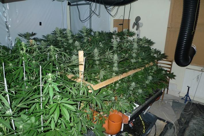 Lka sh cannabis indoor plantage ausgehoben for Pflanzen im zimmer