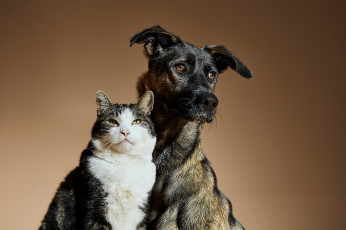 Cat&Dog2.jpg