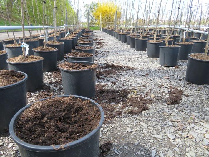 Über 70 junge Obstbäume stahlen Unbekannte in Lauffen